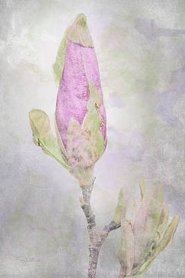 Mixed Media - 10882 About To Bloom by Pamela Williams