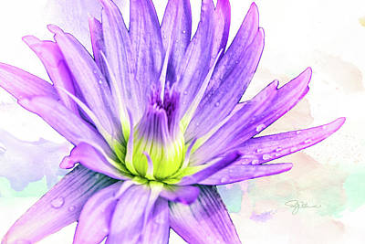 Mixed Media - 10889 Purple Lily by Pamela Williams