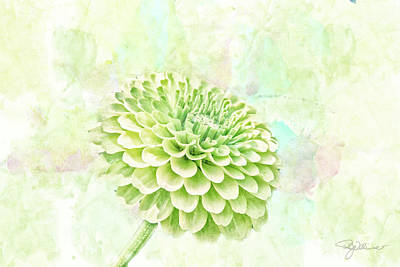 Aster Mixed Media - 10891 Green Chrysanthemum by Pamela Williams