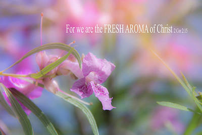 Photograph - 10924 Fresh Aroma by Pamela Williams