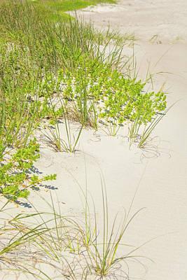 Photograph - 10963 Sea Oats by Pamela Williams