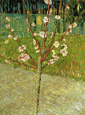 Painting - Almond Tree In Blossom by Vincent van Gogh