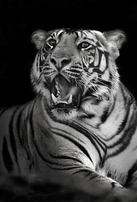 Bengal Tiger Panthera Tigris Tigris Art Print by Panoramic Images