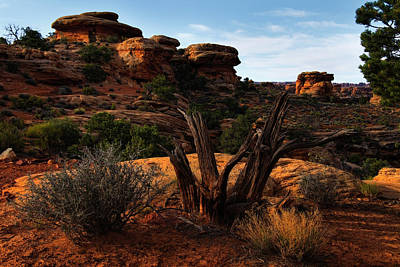 Photograph - Canyonlands National Park Utah by Utah Images