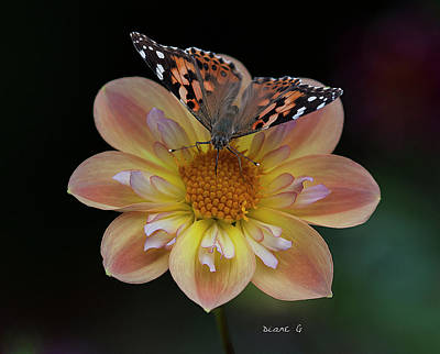 Photograph - Dahlia by Diane Giurco
