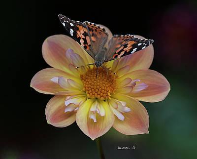 Photograph - Dahlia by Diane Giurco