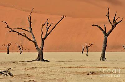 Photograph - Dead Acacia In Dead Vlei by Francesco Tomasinelli