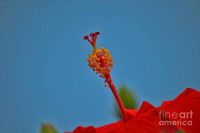 Photograph - 11- Hibiscus by Joseph Keane
