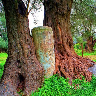 Photograph - Old Olive Tree by Manolis Tsantakis