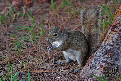 Photograph - 11- Squirrel by Joseph Keane