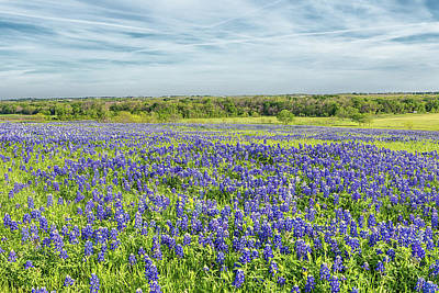Photograph - Texas Bluebonnets 11 by Victor Culpepper