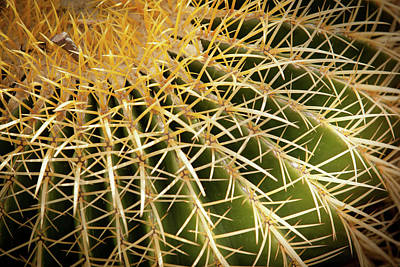 Photograph - Textures Of Arizona by John Magyar Photography