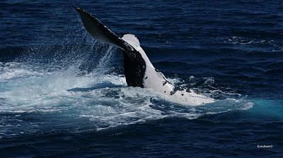 Photograph - Whale Tail by Gary Crockett
