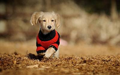 Dog Photograph - Dog by Gloriane Straub