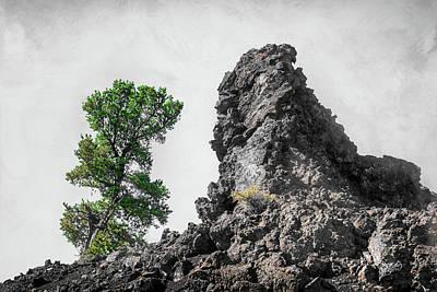 Digital Art - 11000 Lonely Tree by Pamela Williams