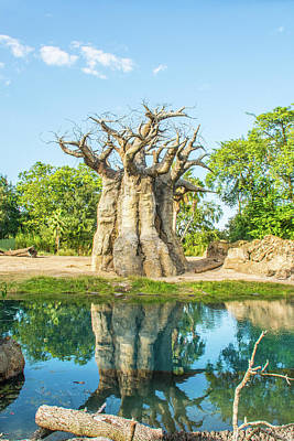Photograph - 11055 Baobab Tree by Pamela Williams
