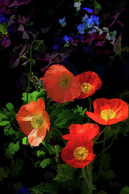 Crepe Paper Photograph - 11896 Crepe Paper Poppies by John Prichard