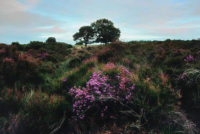 New Forest - England Print by Joana Kruse