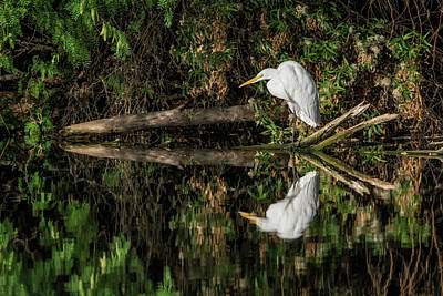Photograph - 11x14 Canvas -great Egret 5525-040918-1 by Tam Ryan