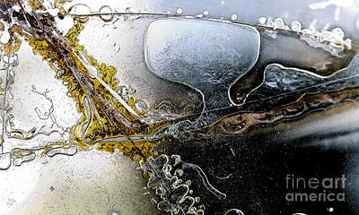 Animal Watercolors Juan Bosco - Abstract Broken Glass by ELITE IMAGE photography By Chad McDermott