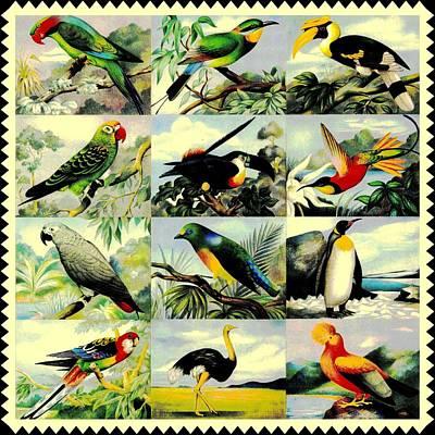 Ostrich Digital Art - 12 Birds by Connie Goldman
