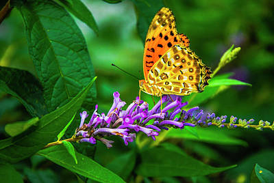 Photograph - Butterfly And Flower Closeup by Carl Ning