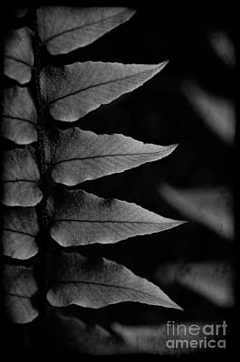 Photograph - Fern Close-up  by Jim Corwin