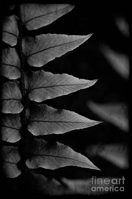Photograph - Fern Close-up  by Jim Corwin