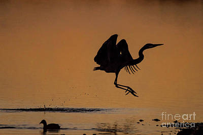 Antique Maps - Happy Dance of the Great Blue Heron by Dwain Patton
