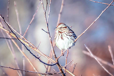 Photograph - House Finch Tiny Bird Perched On A Tree by Alex Grichenko