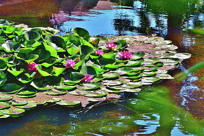 12 Lily Pond With Water Reflections Art Print