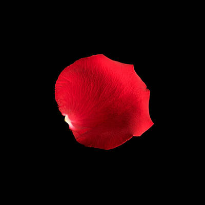 Photograph - Petal by Avril Christophe