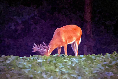 Photograph - 12 Pt Buck by Brian Wallace