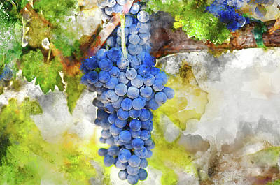 Photograph - Red Grapes On The Vine by Brandon Bourdages