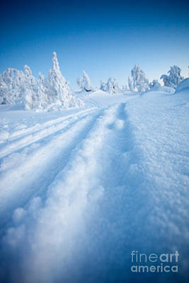Photograph - Winter In Lapland Finland by Kati Finell