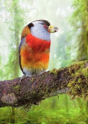 Digital Art - Toucan Barbet by Bill Johnson
