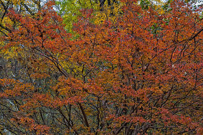 Scifi Portrait Collection - Fall Foliage by Robert Ullmann