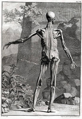 Intaglio Photograph - 18th Century Anatomical Engraving by Science Source