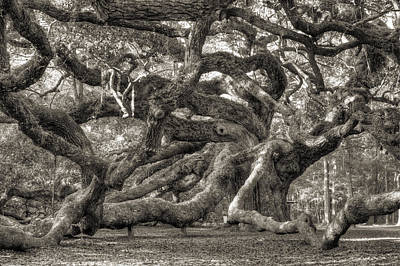 Angel Oak Photograph - Angel Oak Live Oak Tree by Dustin K Ryan