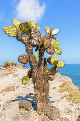 Photograph - Cactus Trees In Galapagos Islands by Marek Poplawski