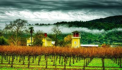 Napa Valley Vineyard Art Print by Mountain Dreams