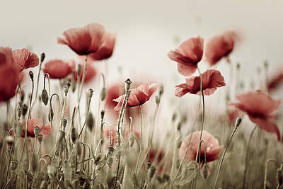 Poppy Dream Print by Nailia Schwarz