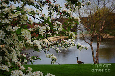 Photograph - Spring Landscape by Celestial Images