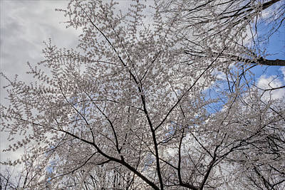 Ps I Love You - Spring Trees by Robert Ullmann