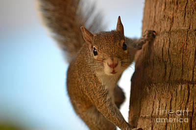 Photograph - 13- Squirrel  by Joseph Keane