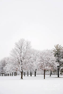 Photograph - Winter Wonderland by Birgit Tyrrell