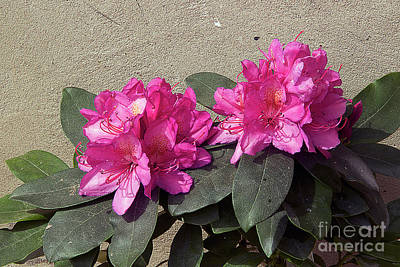 Photograph - Spring Flowers by Elvira Ladocki