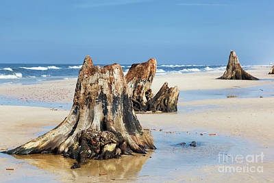 Roots Photograph - 3000 Years Old Tree Trunks On The Beach After Storm. Slowinski National Park, Baltic Sea, Poland by Michal Bednarek