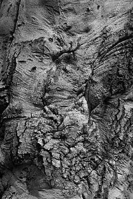 Photograph - Bark by Robert Ullmann