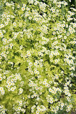 Photograph - Flower Texture by Michael Bessler